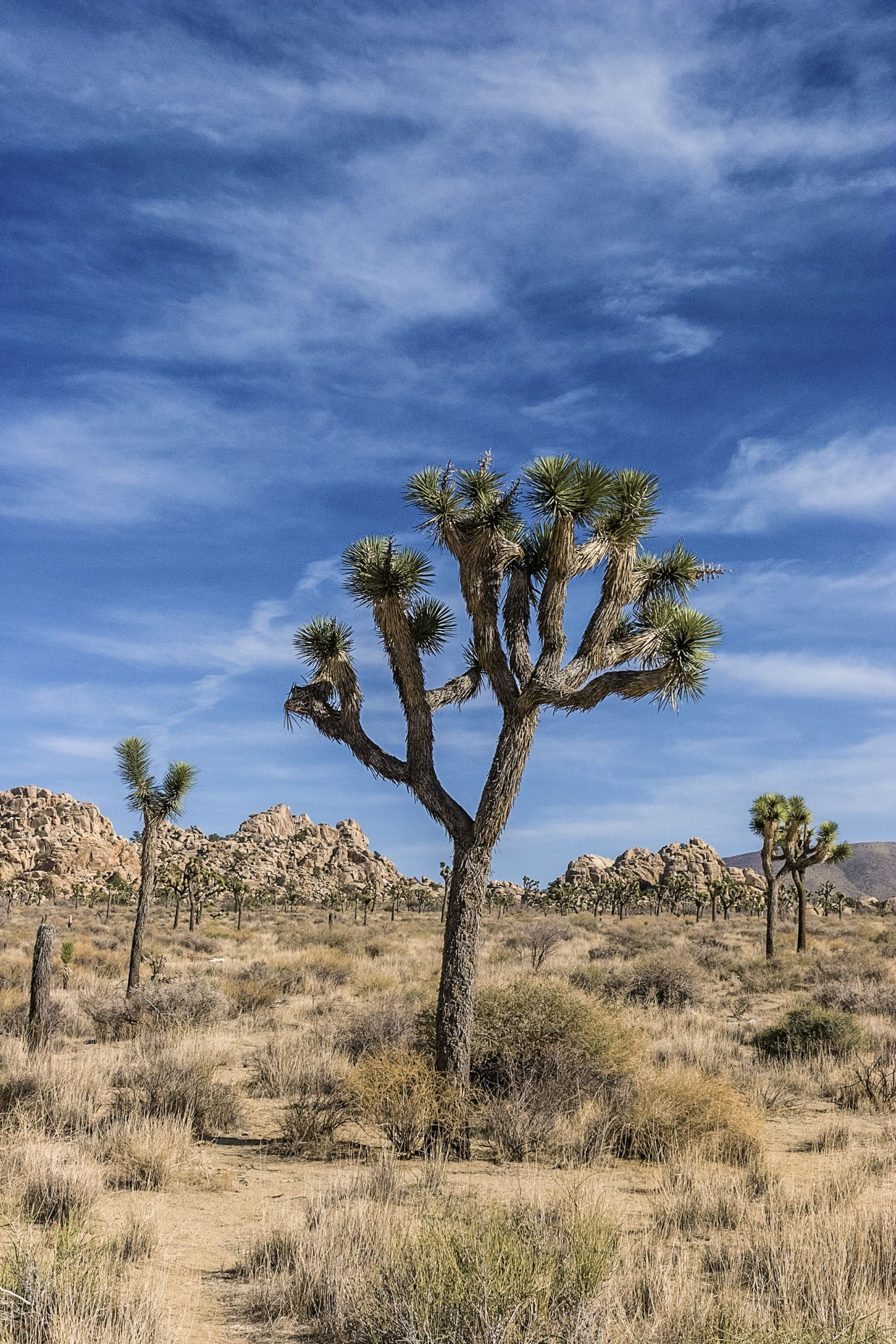 Joshua Tree National Park, Califórnia